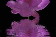 Kukkasista kauneimmat