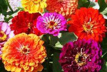garden flowers plants / by Diane Reinhardt-Finocchiaro