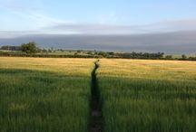 De pe câmp / Natura ne inspiră