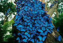 Butterflies / Beauty that comes in different shapes,sizes and colors  like women!