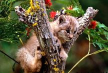 Baby puma / Baby puma pictures