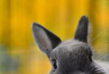 Everything rabbit / by Lauren Hudak
