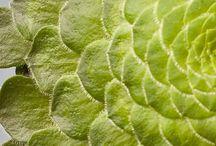 Green Bunnik Plants / Green plants from Bunnik Plants