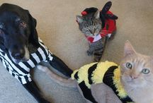Pets in Halloween Costumes / Getting back at our dogs and cats by embarrassing them in their costumes