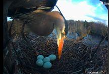 Bird & nest cameras