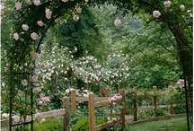gardening and landscaping ideas / by Renee Dawson