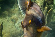 Ocean: fish / by Judith Lombardi
