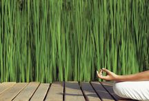 Mindfulness / Mindfulness is the state of mind where one focuses their awareness on the present moment, while simultaneously acknowledging their thoughts, feelings and emotions, without trying to change them, simply noticing they are present and accepting them fully.