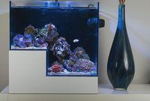 Resif Akvaryumu