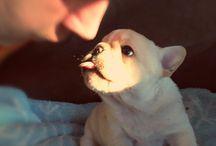 Mascotas cutes
