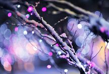Christmas / Christmas decorations, Christmas meals, Christmas images, etc/ / by Kitty Martel