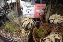 INDOOR HOUSE PLANTS / Indoor house plants