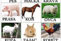 zvierata