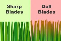 Lawn Care / All about lawn care and how to take care of your lawn. Tips, tricks, and more.
