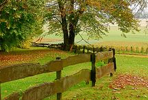 Fences/gjerde