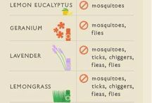 Bugs and Essential Oils