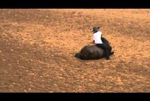 Horse videos / by Stacy Lynn