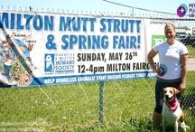 Oakville & Milton Humane Society Mutt Strutt & Spring Fair - 2013