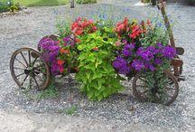 gardens / by Nancy Crisco