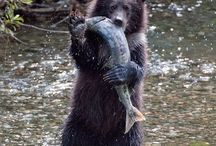медвежонку