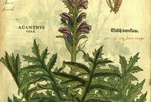 Botanica Antica