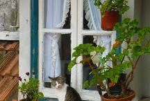 zwierzęta w oknie