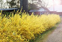 Gardens of Yellow