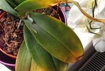 flores #orquideas