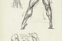 anatomy duh