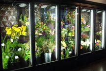 frigider flori