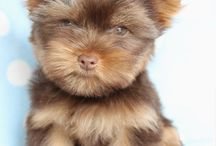 Puppies and Kittens I might like! / Cute puppies