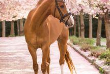 ♡ Love Horses ♡