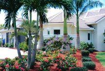 palmeras jardin