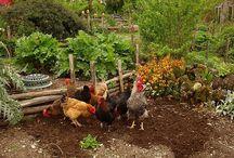 Garden and produce