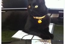 My pussycat Lily