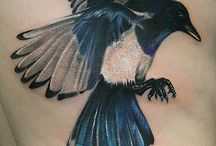 MAGPIES & CORVIDS / Images of Magpies because I love them!