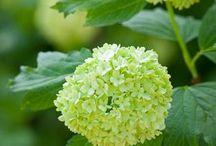 Garden / Favourite flowers