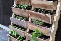 Gardening - Herb Gardening Tips