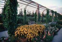 Garden art / Different art pieces for your garden
