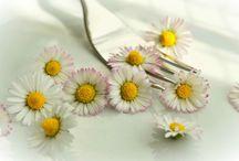 flores comestibles ,recetas etc.