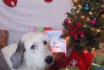 Holiday Pet Photos 2014 / Here are some holiday photos of some of our patients this year!