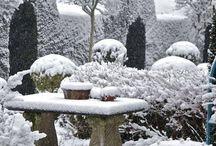 Vinter i trädgården