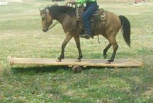 Horse Obstacle Course