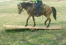 fun horse course