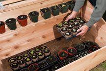 plantor i 1 låda