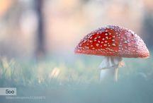 Fungi/Hongos