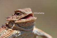laugh animals ^^