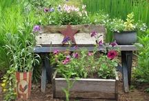 Gardening / by Janice Badger