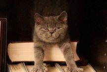 Котики и книги