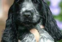 So cute puppie,s.